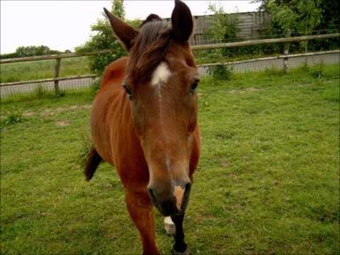 So ein Pony das kann alles