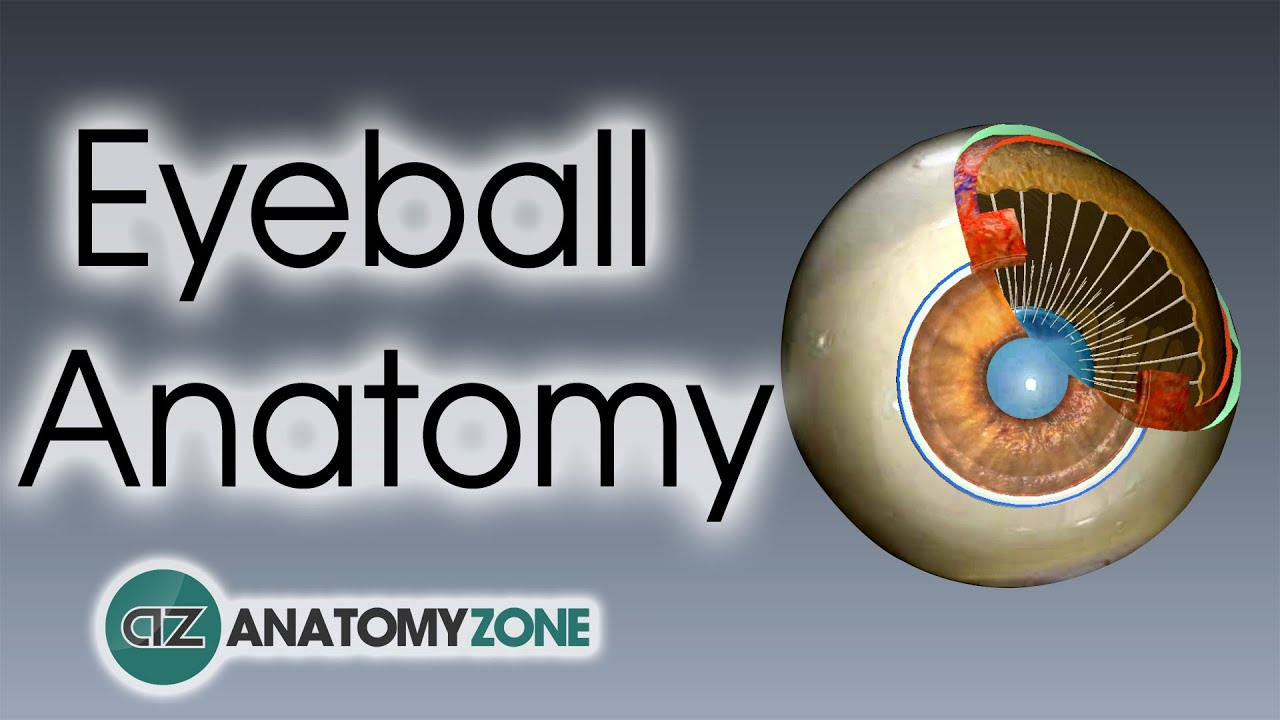 Eyeball Anatomy - YouTube