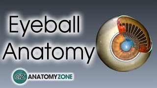 Video Eyeball Anatomy download MP3, 3GP, MP4, WEBM, AVI, FLV Desember 2017