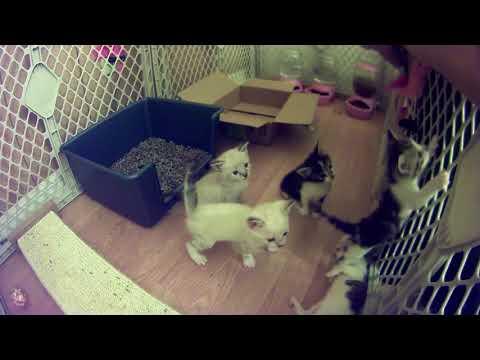 Kissing My Foster Kittens :)