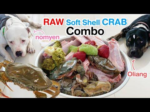 Pit Bulls 1st time eat RAW Soft Shell Crab&Duck+fruity smoothie [ASMR] | BARF | MUKBANG | 犬はカニを食べる