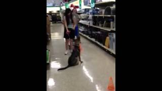 Puppy Training At Petsmart
