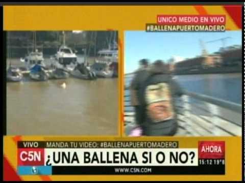 C5N - Sociedad: Una ballena en Puerto Madero (Parte 2)