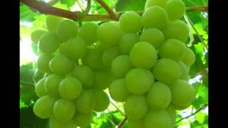 三枝成章作曲「遊園地の汽車」 湯山昭作曲『葡萄の歌』より「葡萄の歌」...
