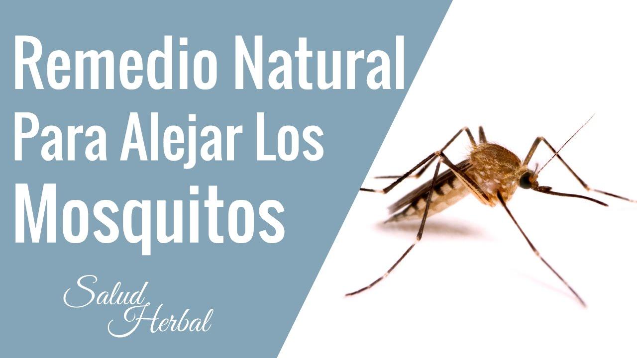 Remedios caseros para alejar los mosquitos durante el verano como alejar los mosquitos youtube - Como ahuyentar mosquitos ...