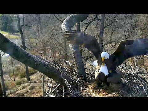 AEF-DC Eagle Cam ~ Afternoon Delight ~ 01·13·17