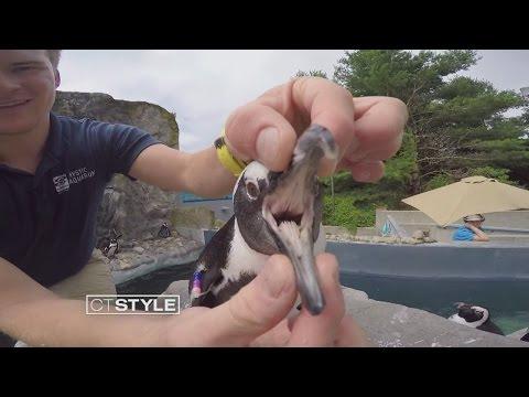 Penguins and Alligators at Mystic Aquarium