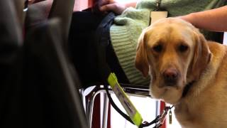 The Shadow In The Darkness: A Guide Dogs Story