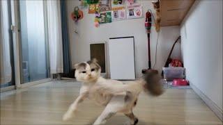 灰色猫の【じゃれようとしたら嫌いな奴の尻尾だった時のリアクション】