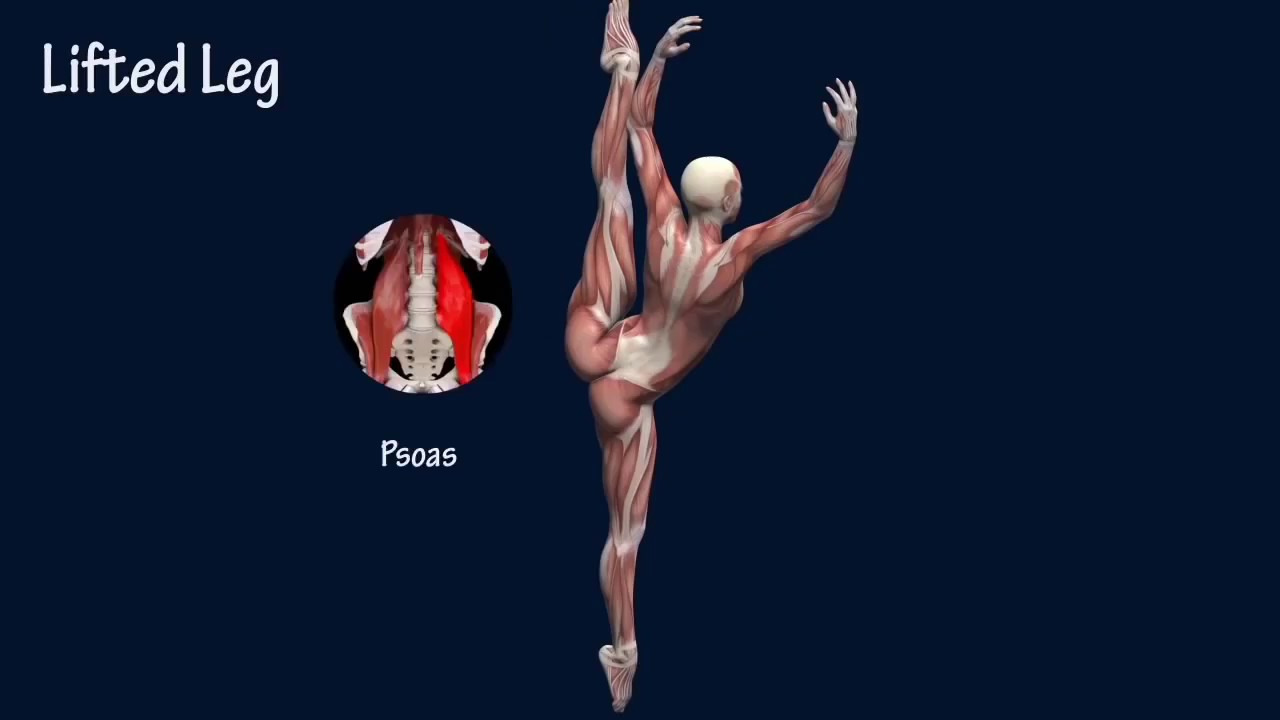 Ballet Dance Anatomy - YouTube