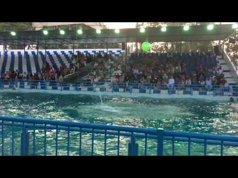 Sea world show karachi