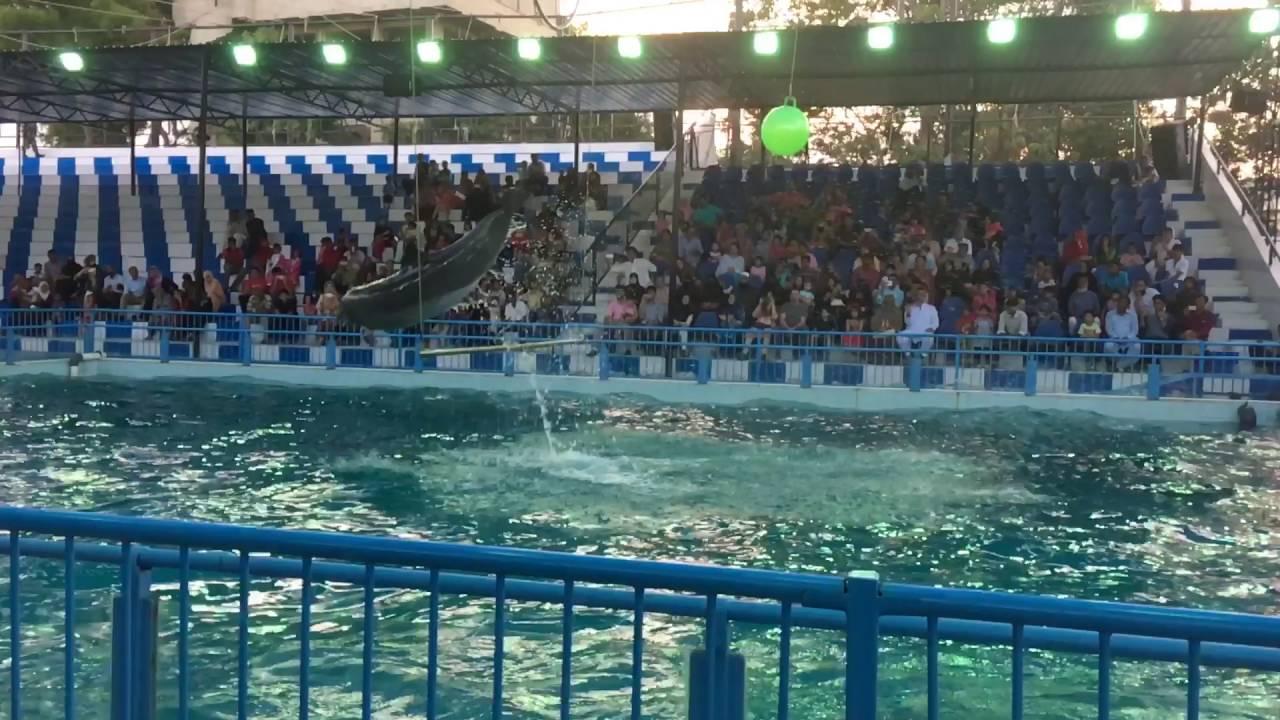 Sea world show karachi youtube - Metropolitan swimming pool karachi ...