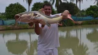 Рыбалка в Тайланде (Паттайе) / Fee Thailand Fishing (Fee Fishing in Thailand)(Платная рыбалка в Тайланде. Таиланд - это не только место для пляжного отдыха но и возможность посетить..., 2016-06-11T12:03:54.000Z)