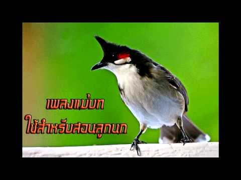 CD เพลงแม่บท สำหรับสอนนกเล็ก 3 ช.ม. โหลดฟรีmp3