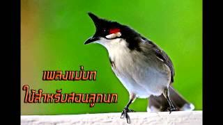 Repeat youtube video CD เพลงแม่บท สำหรับสอนนกเล็ก 3 ช.ม. โหลดฟรีmp3