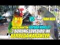 Kopdar Konslet Duel Seru  Lovebird Konslet Ini Berbeda Karakter M T R Tuan Raja  Mp3 - Mp4 Download