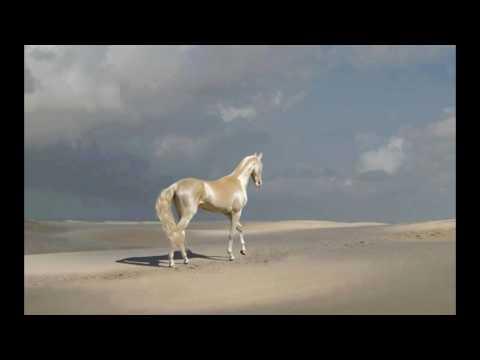 het mooiste paard ter wereld.