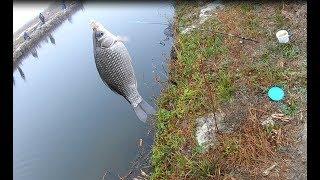 Рыбалка Лиман Парк Карась
