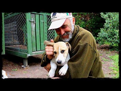 Pig hunters Puppy Dog Vlog 16