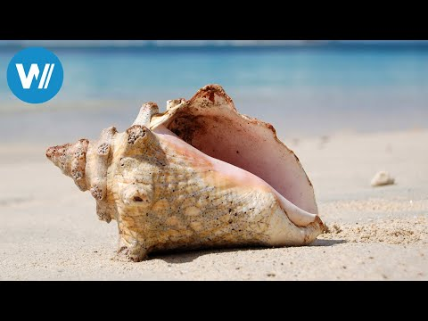 Grenada (travel-documentary from the season