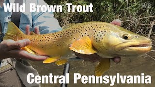 WB - Fly Fishing Wild Brown Trout, Central Pennsylvania - June '18