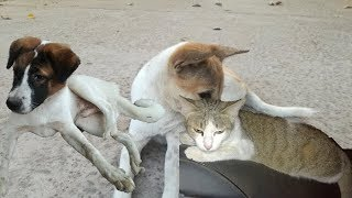 Dogs - Dogs Videos - Cute Dogs - Funny Dogs - Dogs And Cats - Cute Dogs And Cats Videos