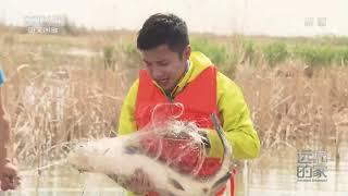 [远方的家]大好河山 河套明珠:船行纳林湖  CCTV中文国际