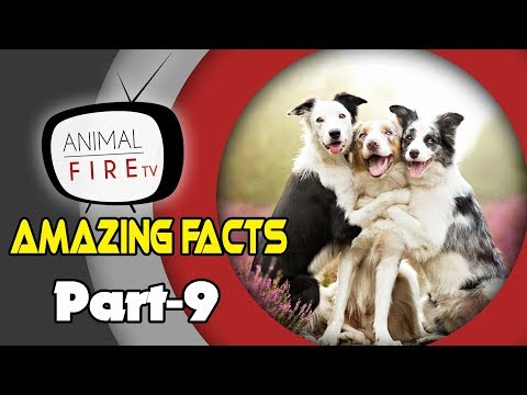 10 Amazing facts about Dogs - Part 9 (Dog Facts)