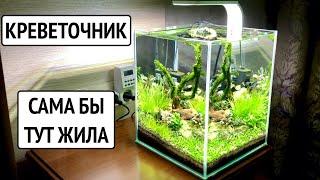 Аквариум для креветок Красный Кристалл. Аквариумные растения. Стрижка мха
