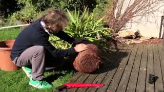 yucca plant maintenance