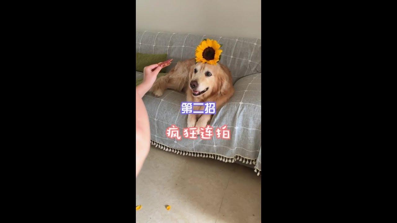 教大家如何利用一支花。拍出網紅狗! - YouTube