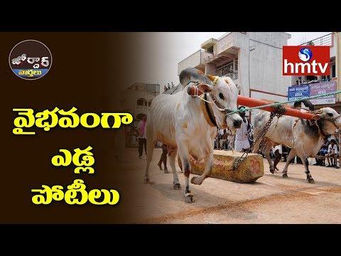 వైభవంగా ఎడ్ల పోటీలు  Jordar News  hmtv Telugu News