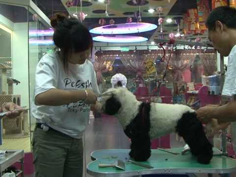 Beijing dog spa turns pooches into pandas