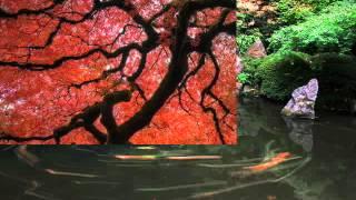 Японский садик музыка Японский саксофон релакс  автор клипа Зоя Боур-Москаленко