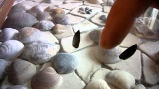 Levitated insect wings, test series of Viktor Grebennikov