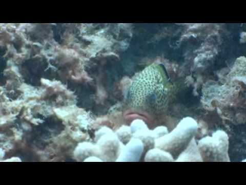 An Exploration of Andros, Bahamas