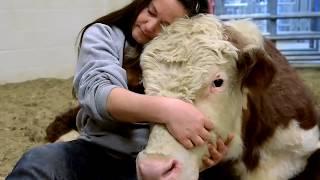 Prendre soin des animaux
