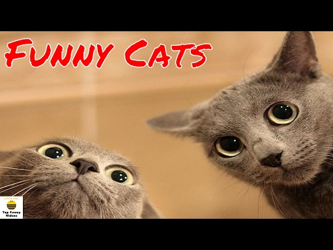 Funny Cats Compilation 2017 🐱🐱 [P5]   Best Funny Cat Videos Ever - Funny Cats 2017 by TFVs