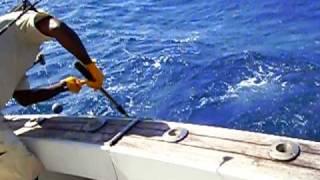 Fishing Mahi-mahi In Grand Bahama