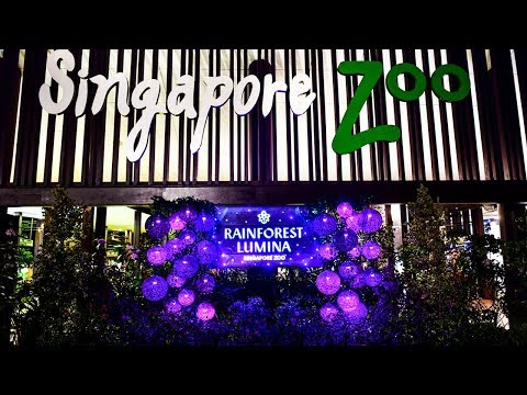 Singapore Zoo ~ RainForest Lumina (A MULTIMEDIA NIGHT WALK ON THE WILD SIDE)