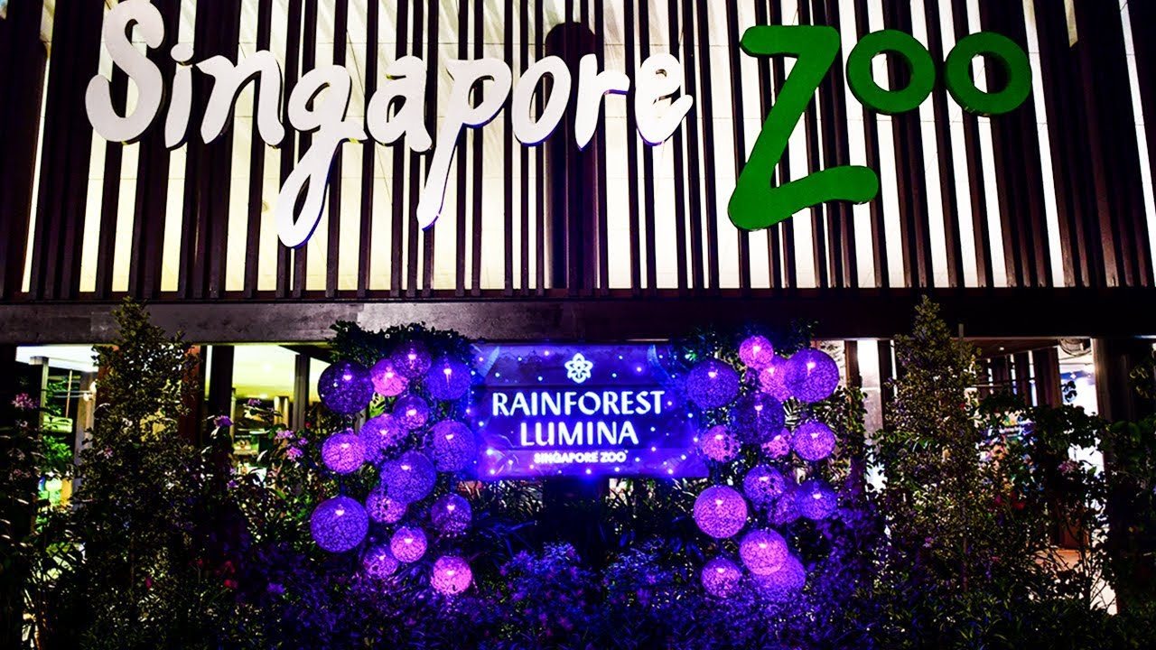 Singapore Zoo ~ RainForest Lumina (A MULTIMEDIA NIGHT WALK ON THE WILD SIDE)