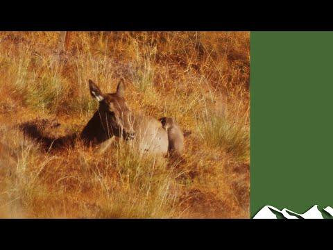 Hunting The Scottish Hills: Ardnamurchan Hind Cull
