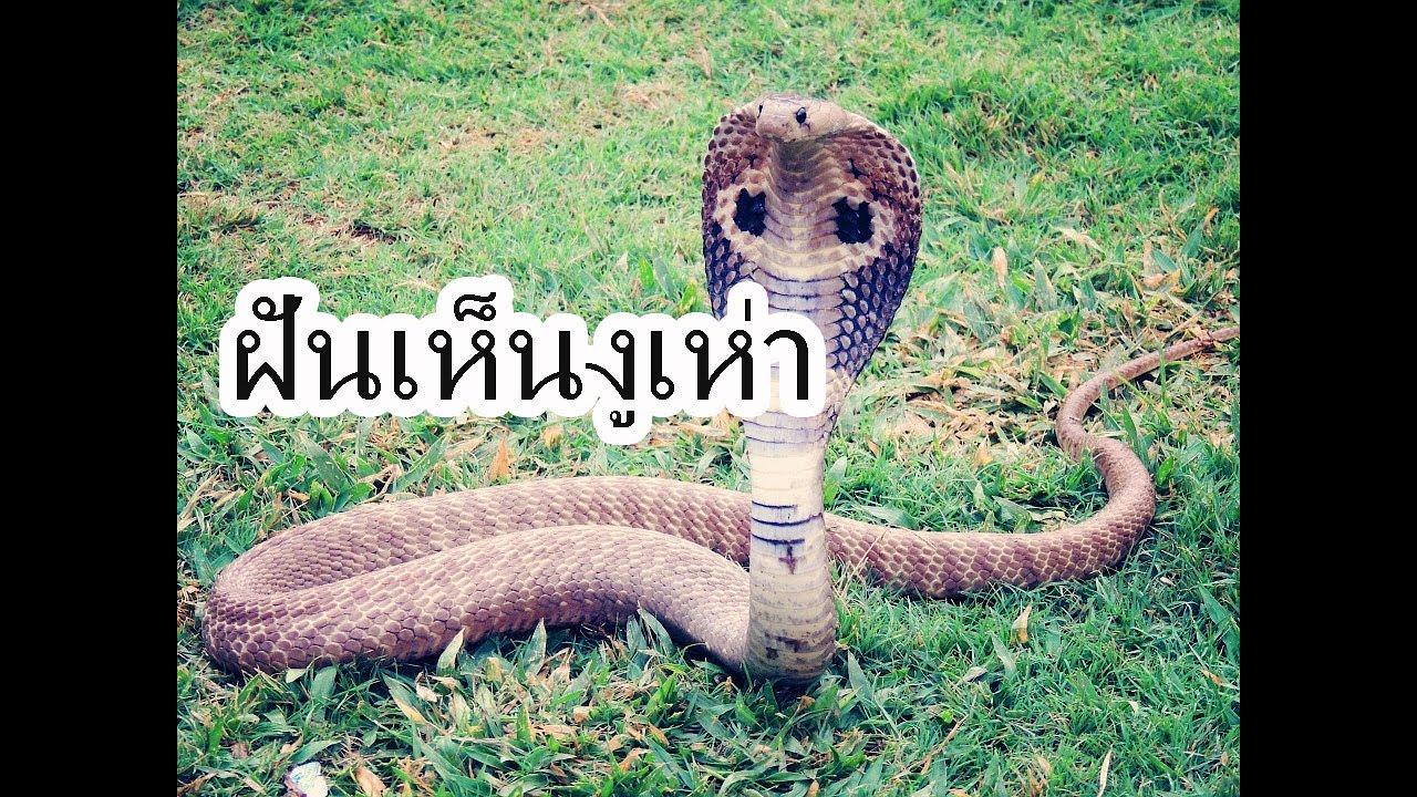 ฝันเห็นงูเห่า ทำนายฝัน งูเห่า