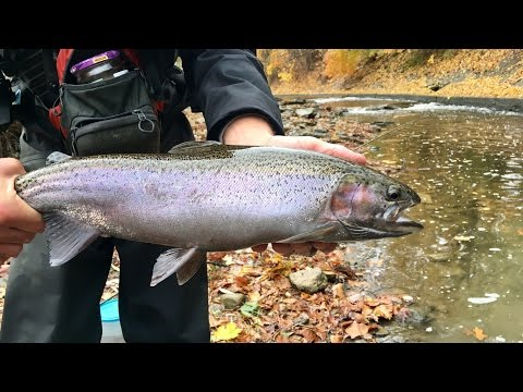FIRST STEELHEAD EVER!!! Fishing HUGE Trout from a SMALL Creek