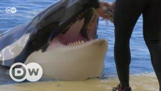 Wale in spanischer Gefangenschaft | DW Deutsch
