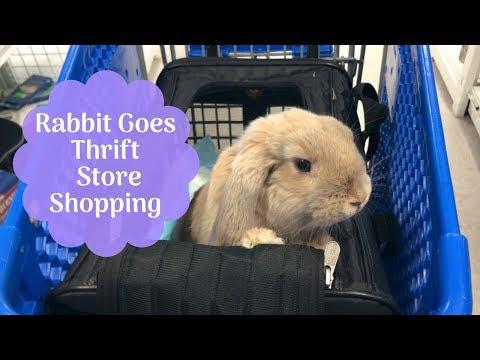 Rabbit Goes Thrift Shopping