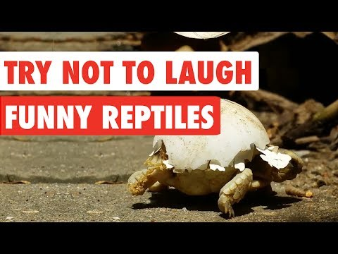 Try Not To Laugh - Funny Reptiles Video Compilation 2017