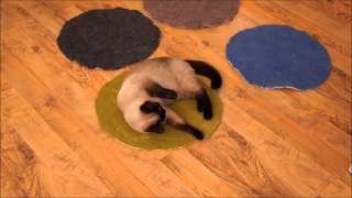 Felted Wool Mat For Cat From Organic And Ecological Pure Wool