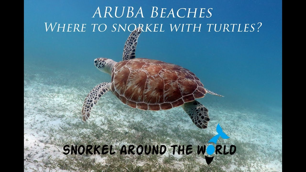 The best 5 beaches for snorkeling with turtles in Aruba