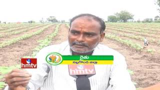 Pomegranate Cultivation Tips|Huge Farmers Interested in Cotton Crop Cultivate |NelaTalli |HMTV